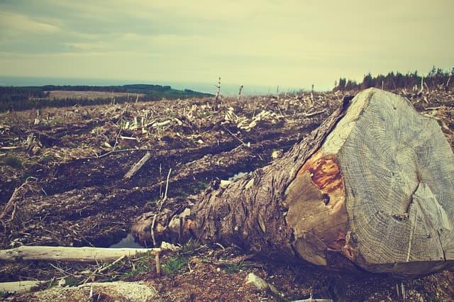 Dünyayı Bekleyen Çevresel Sorunlar